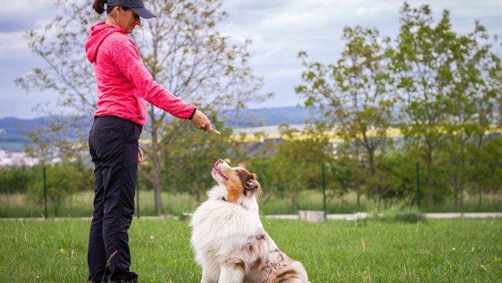 ドッグトレーナーが飼ってる犬ってやっぱりお利口なの?