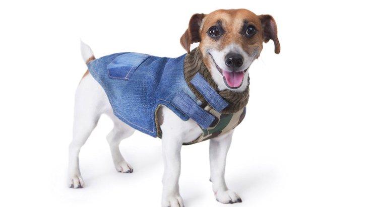 犬が服を嫌がるのはなぜ?慣らせる方法や着せるコツをご紹介します!