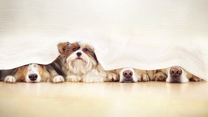 『シャイな性格の犬』がよくする仕草や行動6選