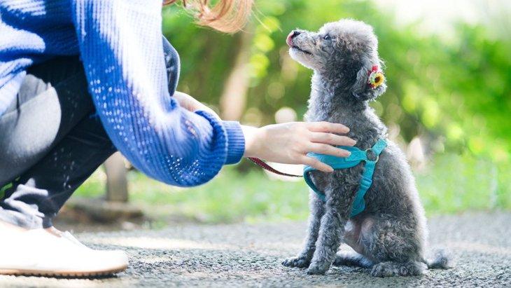 犬が散歩を拒否する時の心理5選!適切な対処法やNG行為まで解説