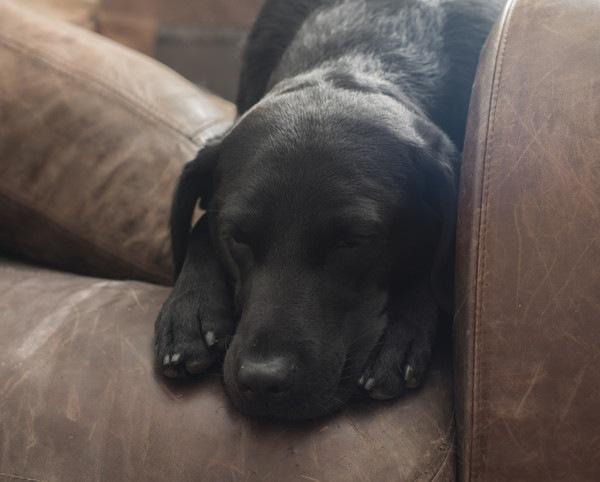 犬のカンピロバクター症について 原因や症状、治療や予防法