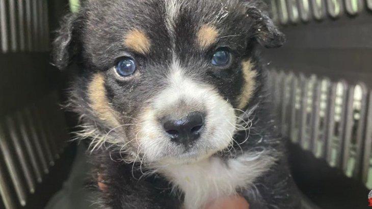 箱に詰められて捨てられた5匹の子犬達を保護!懸命に生きようとする姿に涙