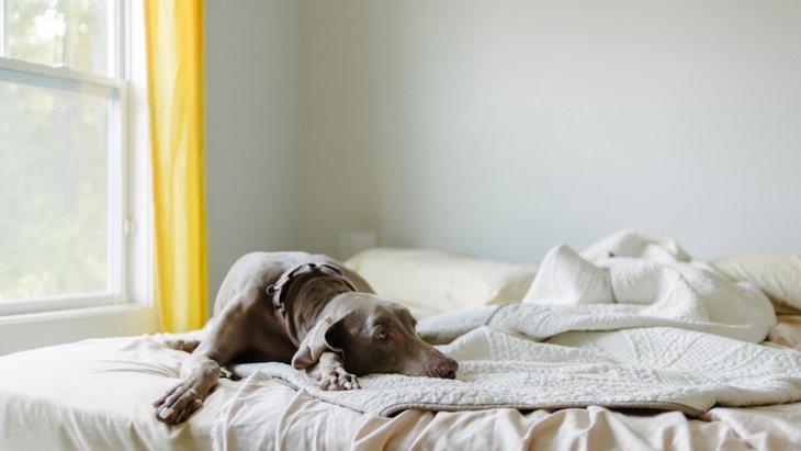 犬が特定の部屋に居座りたがる心理