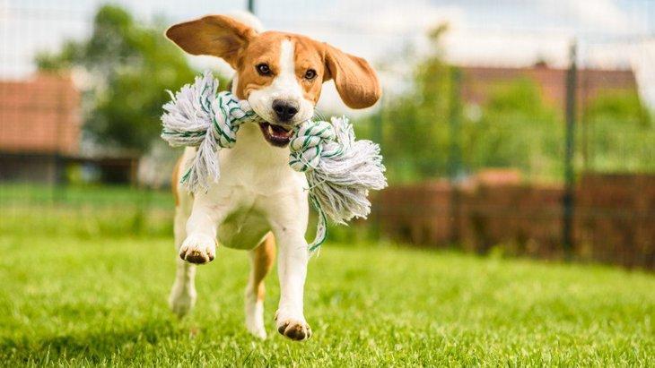 犬のストレス発散にバッチリ!愛犬が楽しめるオススメの遊び6選