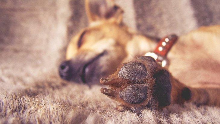 家族の記念に!犬の足型を取る方法4つ
