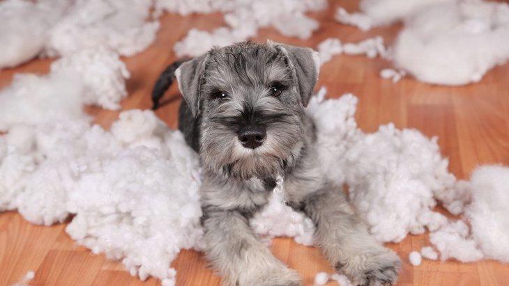 犬を甘やかしすぎると起こる4つのこと