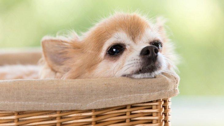 犬が『安心している時』に見せる仕草や行動5選