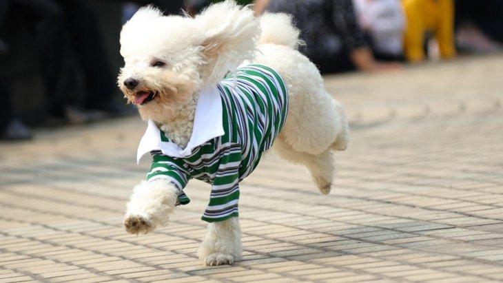 犬の服を手作りする方法と注意点