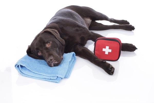 犬の失神について 症状や対処法まで
