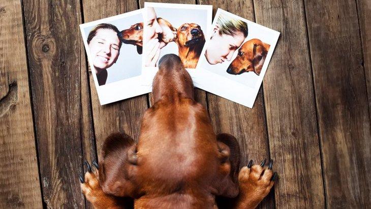 絶対に撮っておきたい『犬の写真』4選