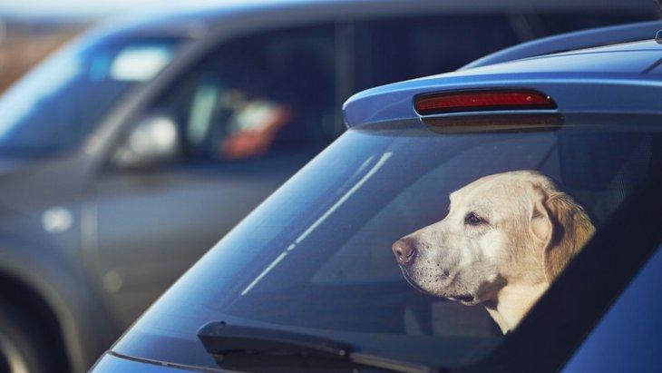 犬が熱中症になりやすい場所4選