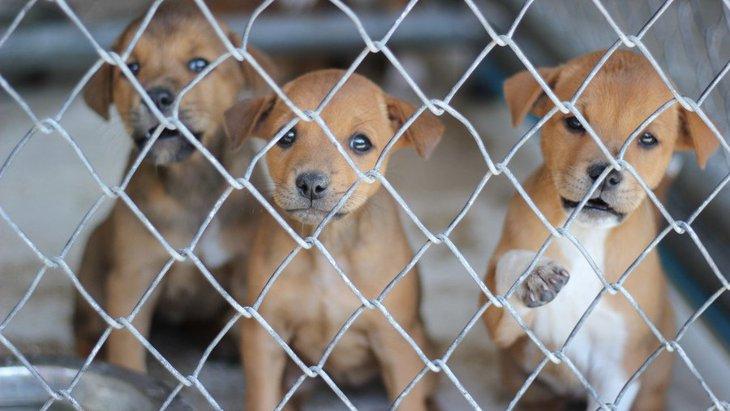 犬の殺処分を減らすために、みんなでできる簡単な支援方法4つ
