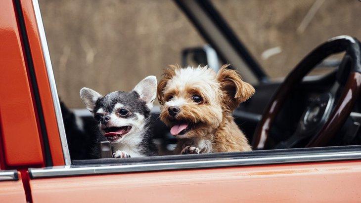 楽しい~!犬が飼い主とのドライブを喜ぶ心理5つ