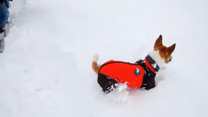 雪の中を駆ける犬!嬉しそうに遊ぶその姿に癒される(まとめ)