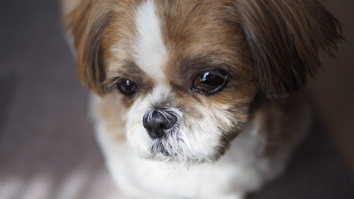 犬を過度に疲れさせてしまう飼い主のNG行為4選