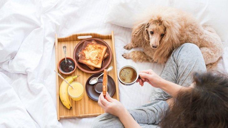 犬がメープルシロップを食べても大丈夫?成分や効果、与える際の注意点とは