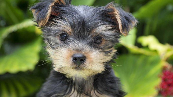 犬の引き渡しは生後何ヶ月が最適?時期と気を付けたいこと