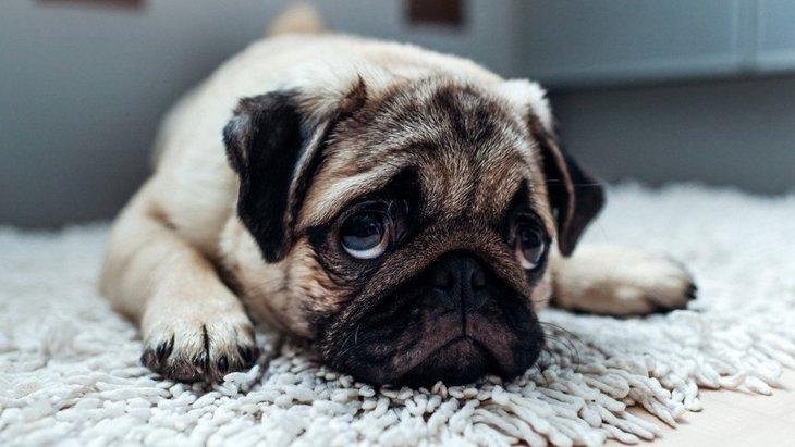 犬の機嫌が悪いときの5つのサインと対処法