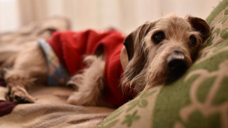 愛犬が『老犬になった』と感じる5つの瞬間