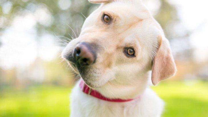 犬が人を怖がっている時に見せる仕草3選!適切な対処法は?