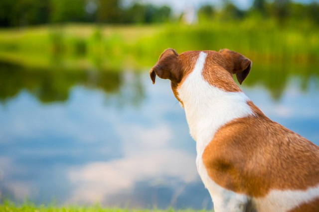 犬が飼い主の後ろに座る時の心理5つ