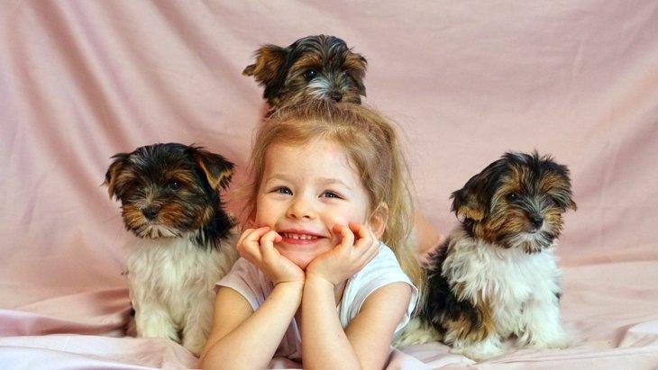 【大きさ別】犬の人気ランキングトップ3♡