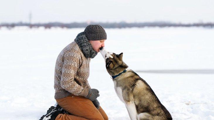犬の家畜化についての新理論、決め手になったのは食料の肉
