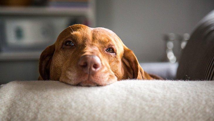 犬にとってはNG!『今すぐやめるべき生活習慣』4選