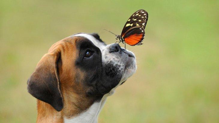 季節が春から夏に変わる時に注意すべき犬のコト3選