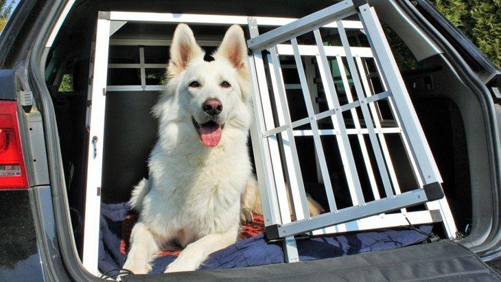 レンタカーに犬を乗せる際のマナーと注意点