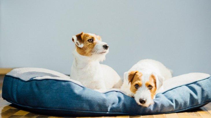 犬がリラックスできない『NG環境』4選!どんな空間が犬にとって最適なの?