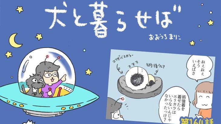 犬と暮らせば【第164話】「エリマキエマさんの誕生」
