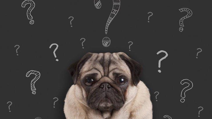 犬にしてはいけない『ダメ』の教え方3選!こんなしつけだと愛犬を苦しめてしまうかも…?