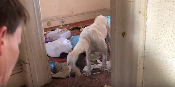 無人の家に飛び込んで出られなくなった犬を保護。最後がとてもキュート!