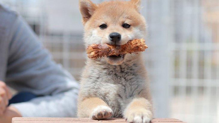 愛犬を家に迎えた初日あるある7つ!あなたはどうだった?