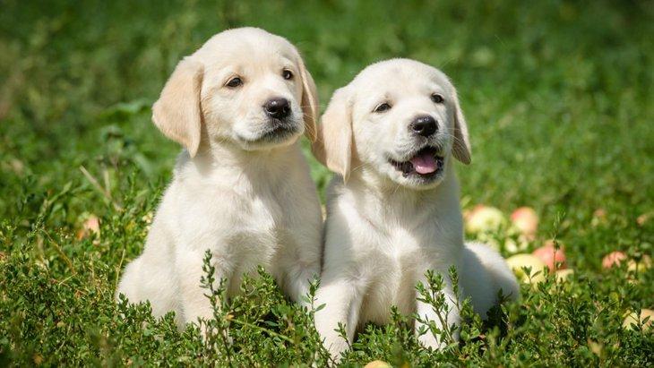 「改正動物愛護法」って?愛犬家なら知っておきたいペットの命を守るための法律
