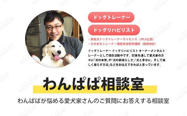 噛み癖・興奮癖のある2匹の犬を同時に治すにはどうしたらいい?