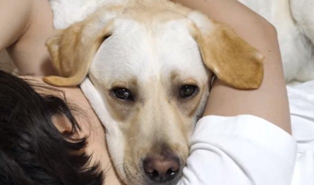 飼い主さんに抱き締められて眠るワンちゃん