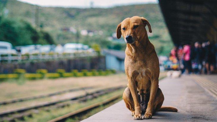 犬と電車に乗る時のルールまとめ!料金やマナー、注意点とは