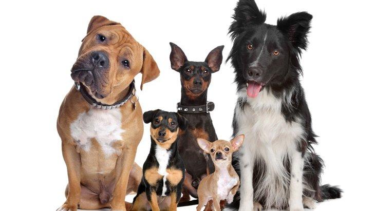 知ってた?犬の身体に関する『10の豆知識』