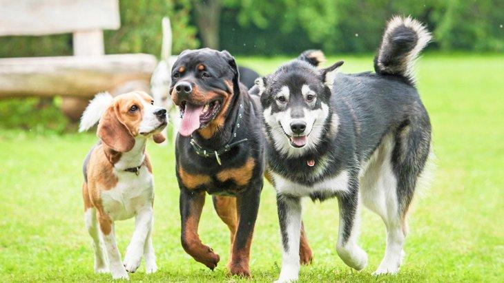 犬を『多頭飼いしてはいけない人』の特徴4選