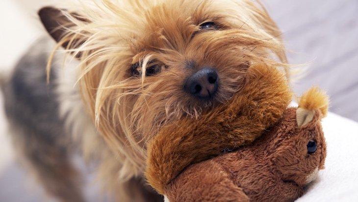 小型犬を飼うときに絶対知っておきたい注意点4つ