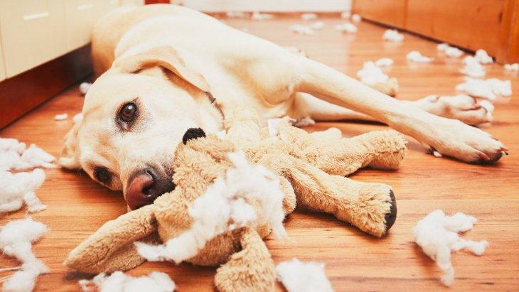 犬をお留守番させるときに片付けたほうが良いもの5つ