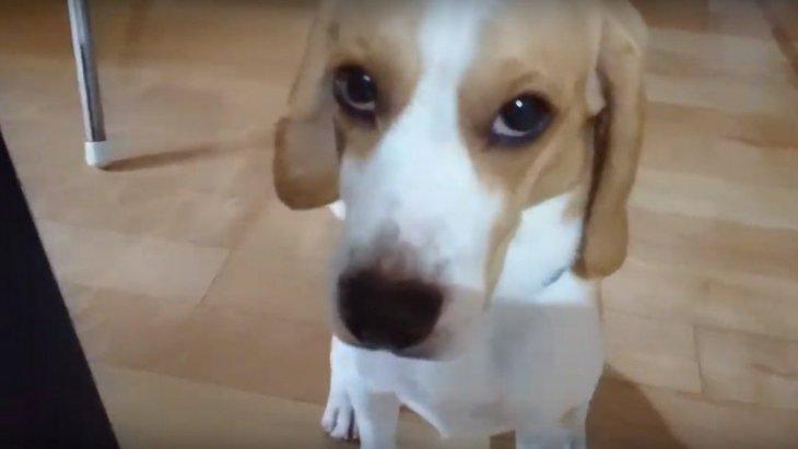 愛犬に疑惑の目を向けられる飼い主。何とも言えない表情がグッときてしまう