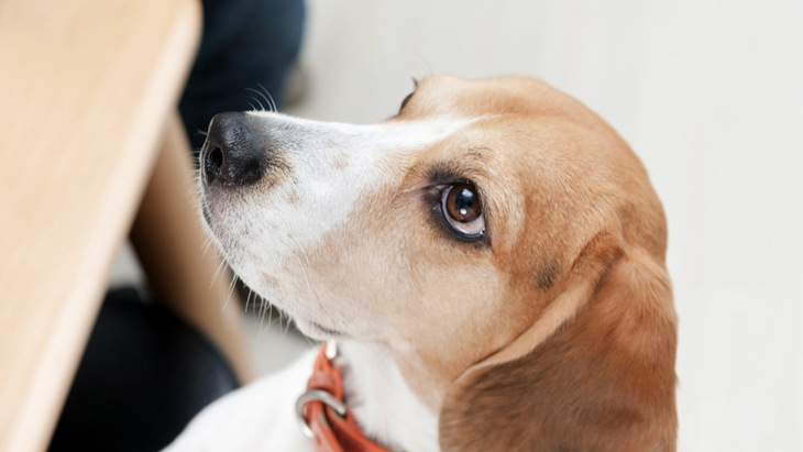 犬が前足で「ちょいちょい」とタッチしてくる心理6つ