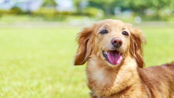 飼主が逮捕され、取り残された愛犬はセンターへ。そして悲劇は起きた…