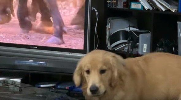 画面の裏にいるの?!テレビを観るワンちゃんの反応が面白かわいい♡
