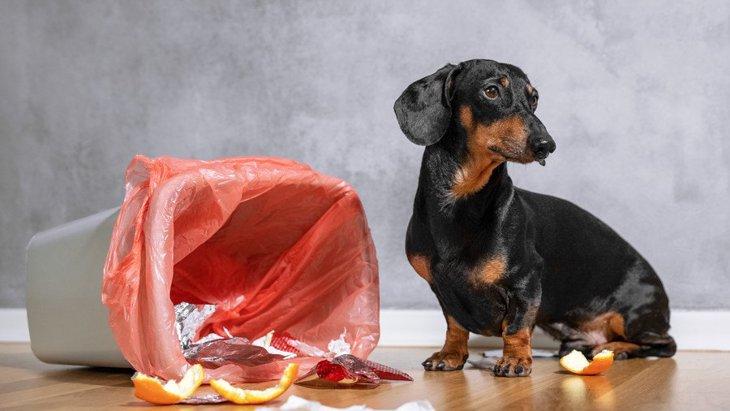 犬の『拾い食いリスク』が高い場所5選