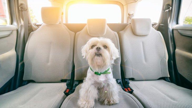 犬を車内に残す危険は夏だけでなく1年を通じてNG