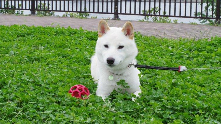 遊びの途中で愛犬のテンションが突然下がるのはどうして?